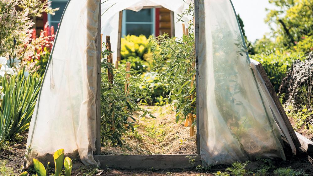 Karstums sakņu dārzā un siltumnīcā