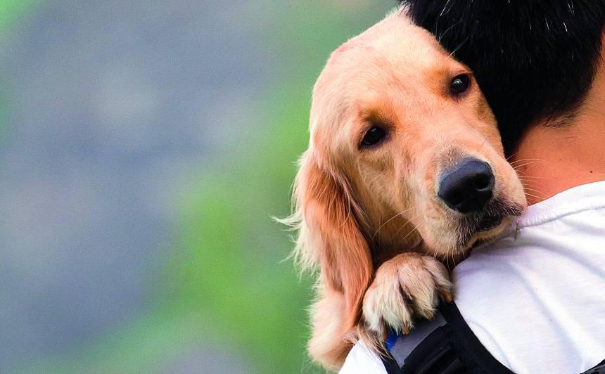 10 veidi, kā <strong>pasargāt suni no vēža</strong>