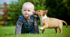 Ģimenē ar bērnu ienāk suns. <strong>Kas jāzina vecākiem</strong>
