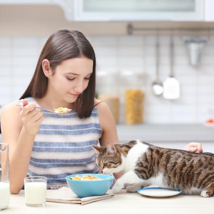 <strong>Nelūgts ciemiņš</strong> uz galda — kaķis