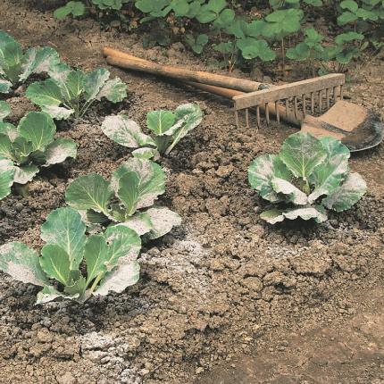 Saimnieko gudri — <strong>izmanto pelnus</strong> dārza mēslošanai