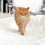 Kā <strong>gādāt par kaķi</strong> ziemā