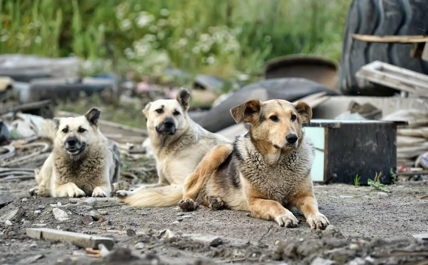 14 jautājumi un atbildes par <strong>klaiņojošiem suņiem laukos</strong>