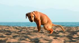 Kāpēc suns <strong>čurājot neceļ kāju?</strong>