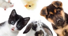 <strong>Mēs saderam kopā…</strong> Kuri mājdzīvnieki var sadzīvot?