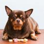<strong>Mūsdienu sērga –</strong> suņi ar lieko svaru