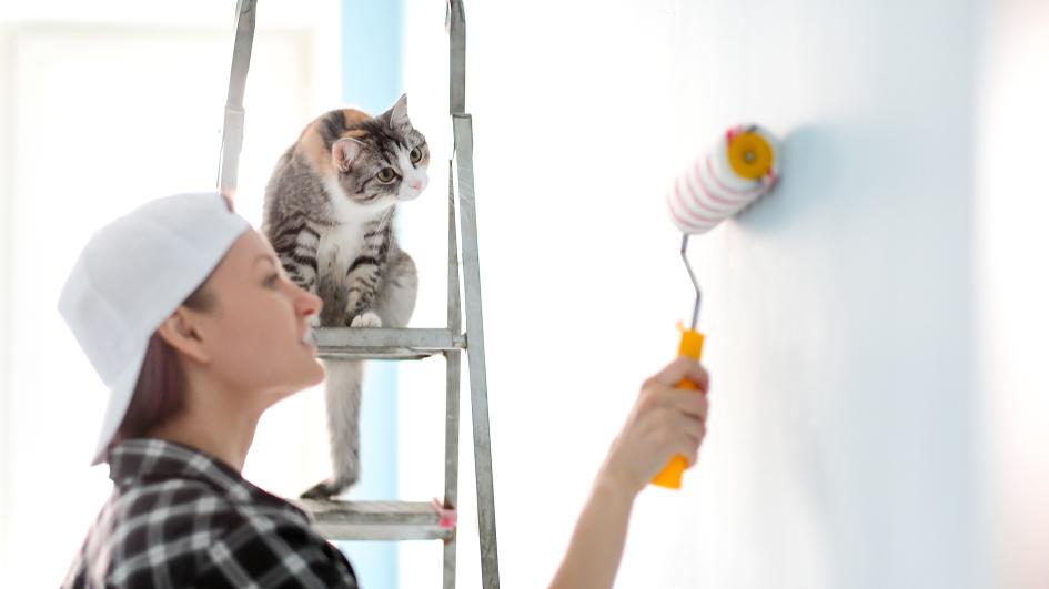 Kā <strong>pasargāt svaigi izremontētu dzīvokli</strong> no kaķa?