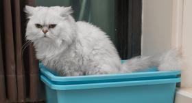 <strong>Paštaisīti pakaiši</strong> kaķa tualetei