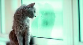 Viens pats mājās. <strong>Cik ilgi mājdzīvnieku drīkst atstāt vienu pašu?</strong>