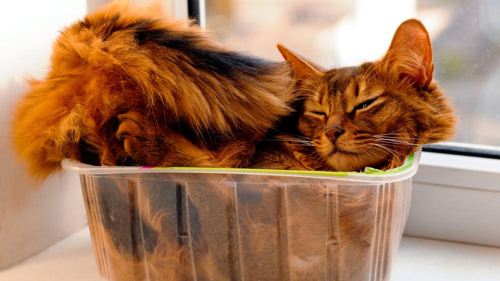 <strong>Mincis <em>ar putniem</em>?</strong> Kaķu dīvainās uzvedības izpausmes