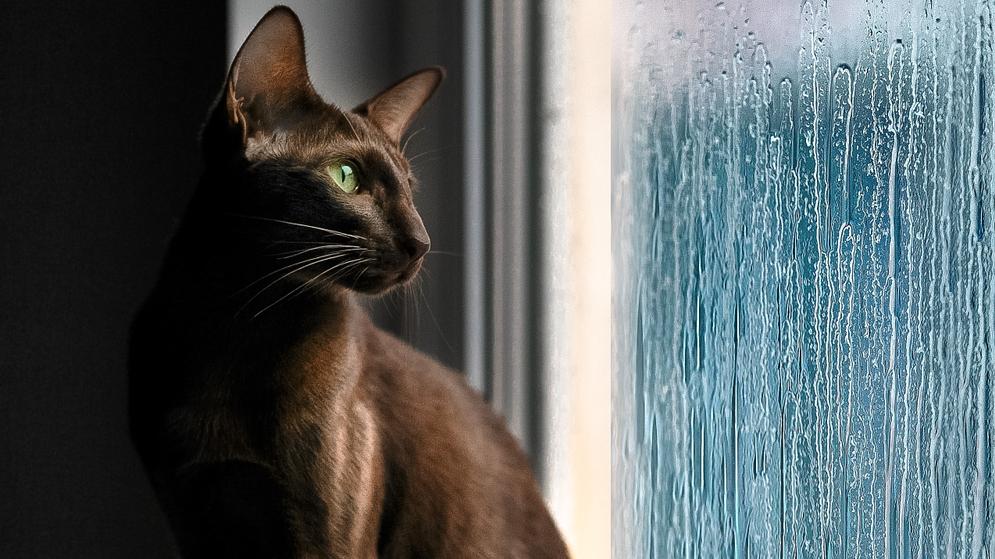 Kaķi — sinoptiķi. <strong>Vai dzīvnieki var paredzēt laikapstākļus?</strong>