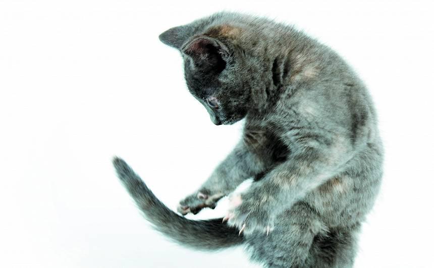 Kāpēc kaķis <strong>ķer savu asti?</strong>