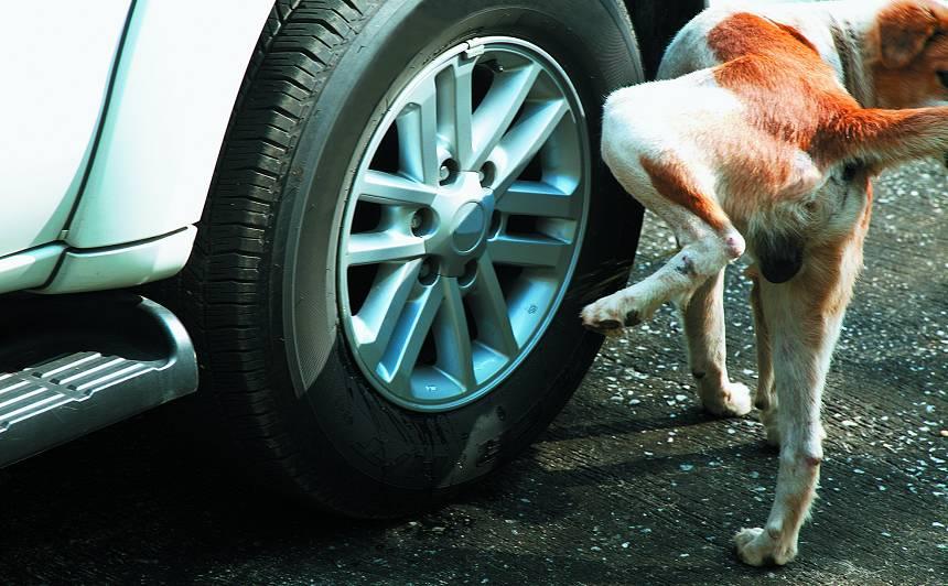 <strong>5 populārākie jautājumi</strong> par suņiem to audzināšanas laikā