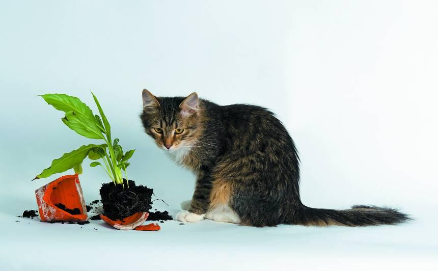 Kāpēc kaķi ēd <strong>smiltis un zemi?</strong>