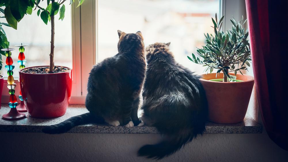 Kāpēc kaķiem patīk <strong>skatīties pa logu?</strong>