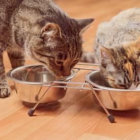 Viens <strong>ēd par diviem</strong>