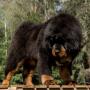 Suns, kas var <strong>pieveikt lāci</strong>