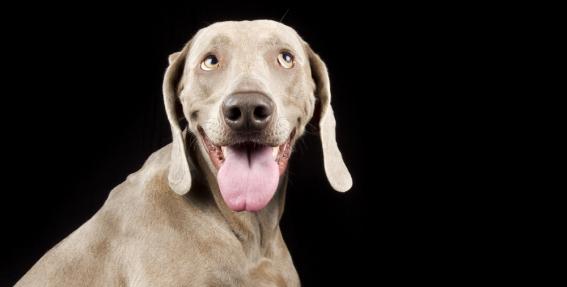 <strong>50 pārsteidzoši fakti</strong> par suņiem
