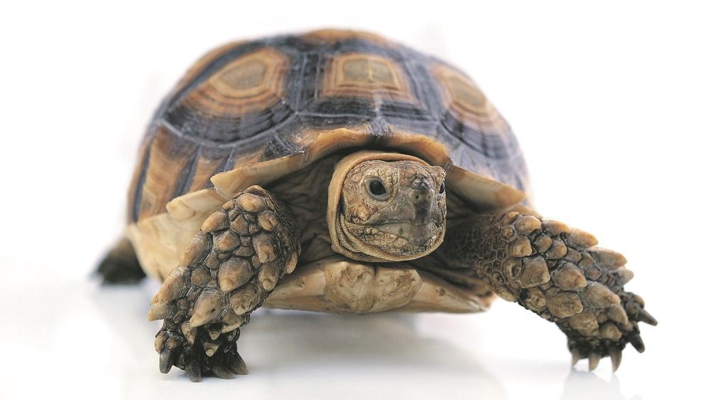 Kā iekārtot <strong>māju bruņurupucim</strong>