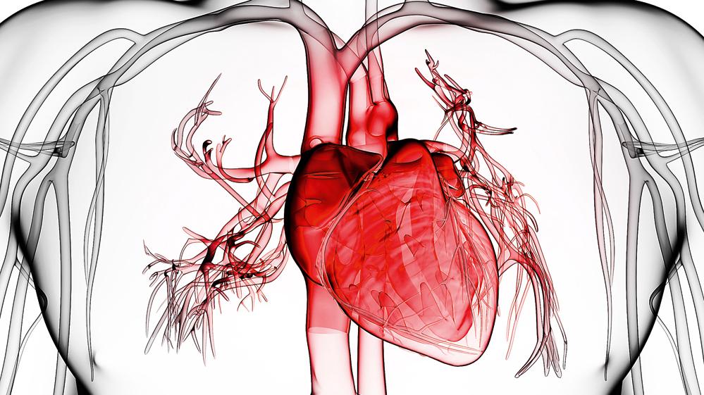 Sirds pārvērtības — <strong>ķermeņa galvenais zobrats</strong>
