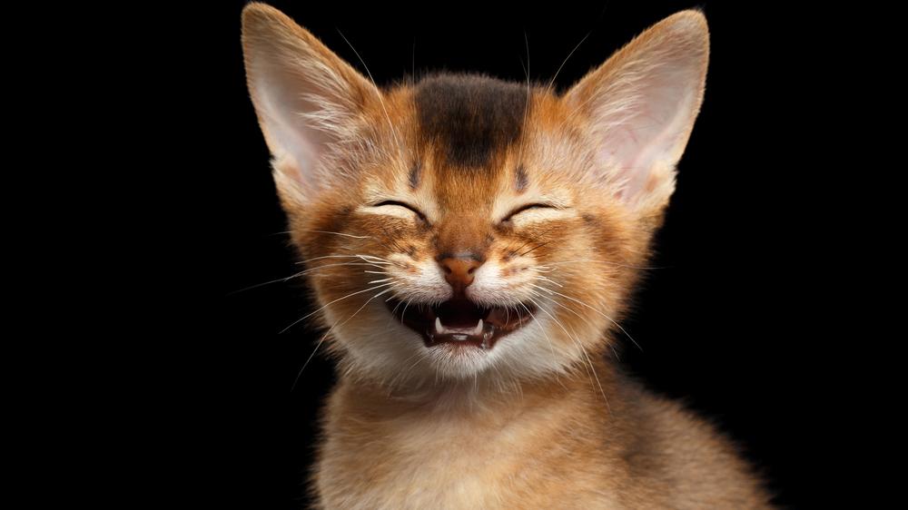 <strong>100 pārsteidzošu faktu</strong> par kaķiem