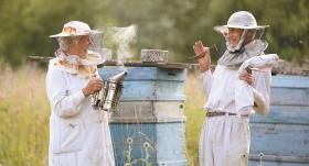 Vijas Eniņas <strong>nomierinošā bišu terapija</strong>