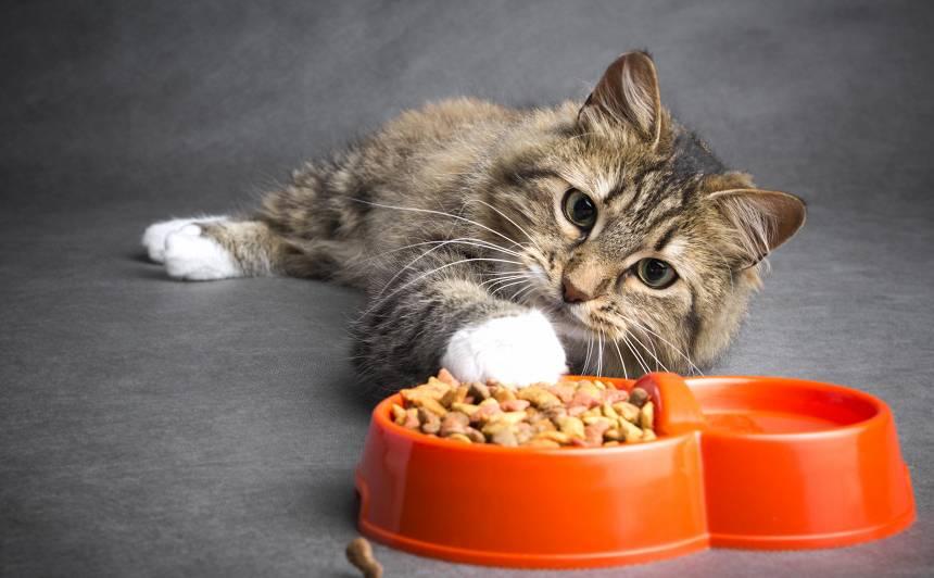 Kāpēc kaķi <strong>apkašņā ēdienu?</strong>