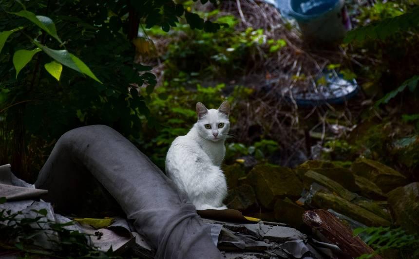 <strong>Pieklīdis kaķis.</strong> Ko darīt?