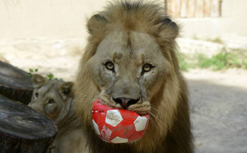 Rīgas Zoodārzs aicina uz <strong>tradicionālajām Dzīvnieku dienām</strong>