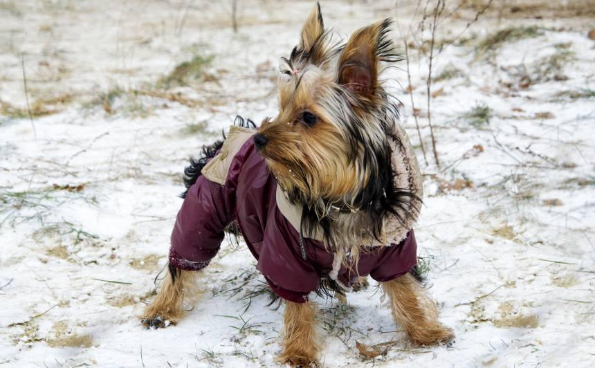 <strong>15 vērtīgi padomi</strong>, kā rūpēties par suni ziemā