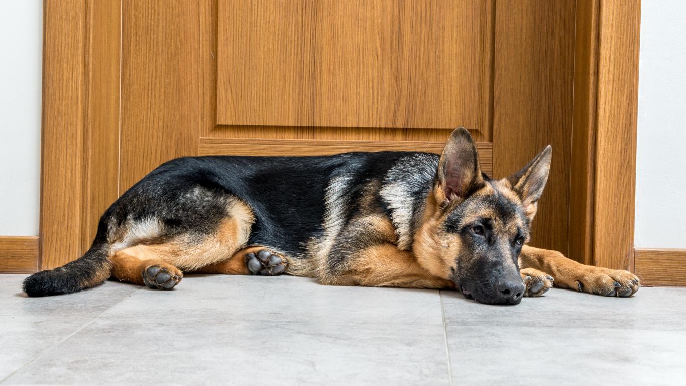 Šķiršanās un suns — <strong>vai dzīvnieks atcerēsies tavu <em>bijušo</em>?</strong>