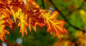 Pārspēts 25.oktobra <strong>Latvijas siltuma rekords</strong>