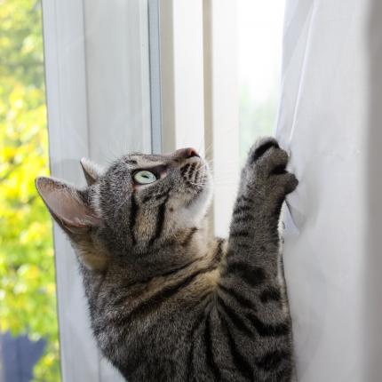 7 ieteikumi, kā <strong>atradināt kaķi no rāpšanās pa aizkariem</strong>