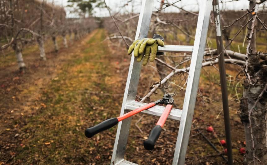 Oktobra darbi <strong>augļu un ogu dārzā</strong>