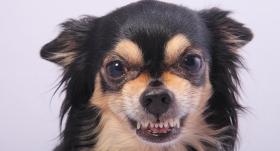 Kāpēc sunim <strong>pēkšņi mainījusies uzvedība?</strong>