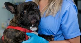 Kā mazināt <strong>bailes no veterinārārsta apmeklējuma</strong>