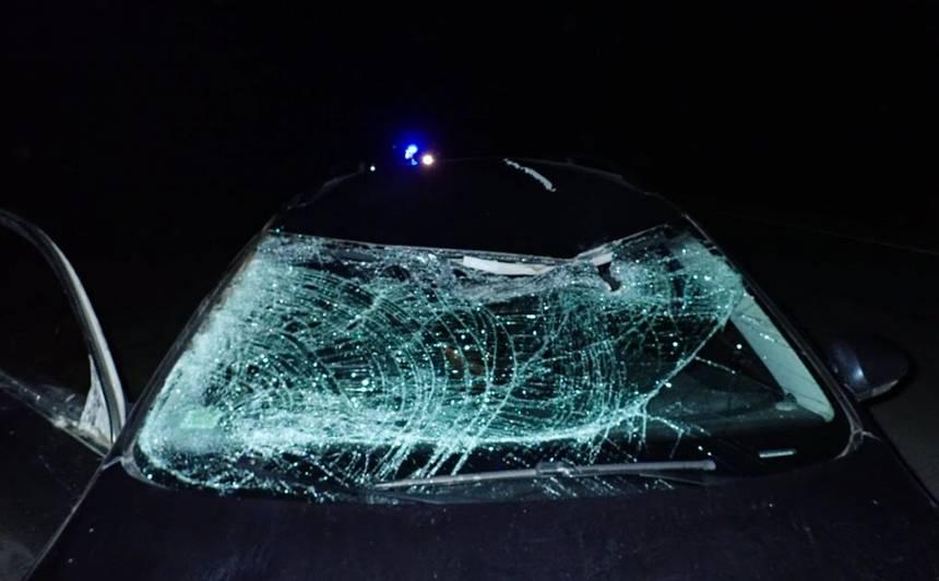 FOTO: Latvijā notikušas vairākas <strong>automašīnu sadursmes ar meža zvēriem</strong>