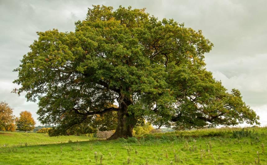 <strong><em>Diži koki dižā valstī</em></strong> — Gaujas Nacionālais parks Valsts svētku ieskaņā aicina uz īpašu pasākumu visai ģimenei
