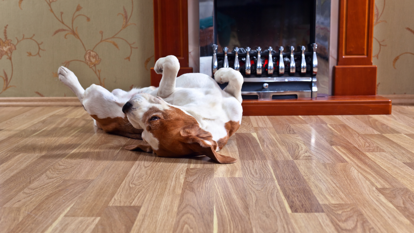 Piemērotākais grīdas segums, <strong>ja mājā ir suns</strong>