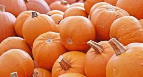 Ķirbju trakums — <strong>mēneša laikā nopērk 5 tonnas oranžo skaistuļu</strong>