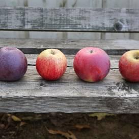 Ilgspēlējošie āboli