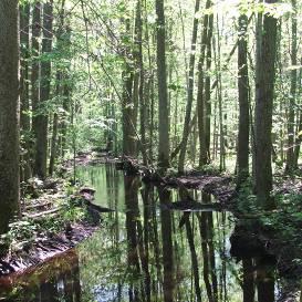 Dumbrājs  Dabiskais meža biotops– ekoloģiski vērtīga vieta mežā, kur dažādu apstākļu kopums nodrošina retu un apdraudētu augu u