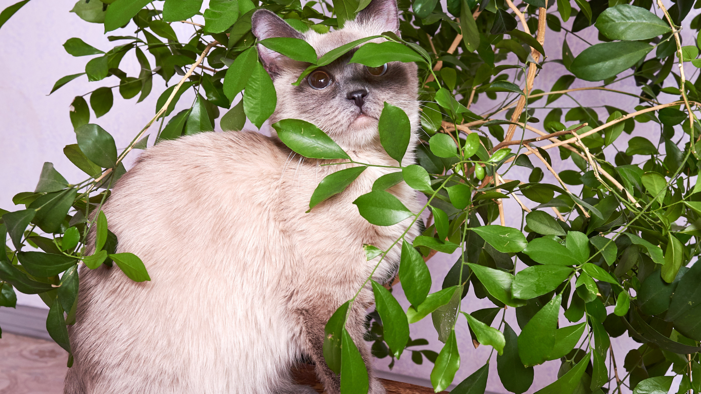 10 istabas augi, kas <strong>kaķiem ir droši</strong>