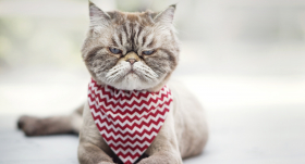 Par ko <strong>apvainojas kaķi?</strong>