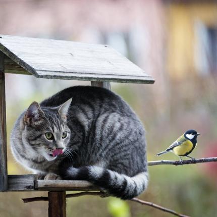 Kaķa medību instinkts — <strong>kā ar to sadzīvot?</strong>