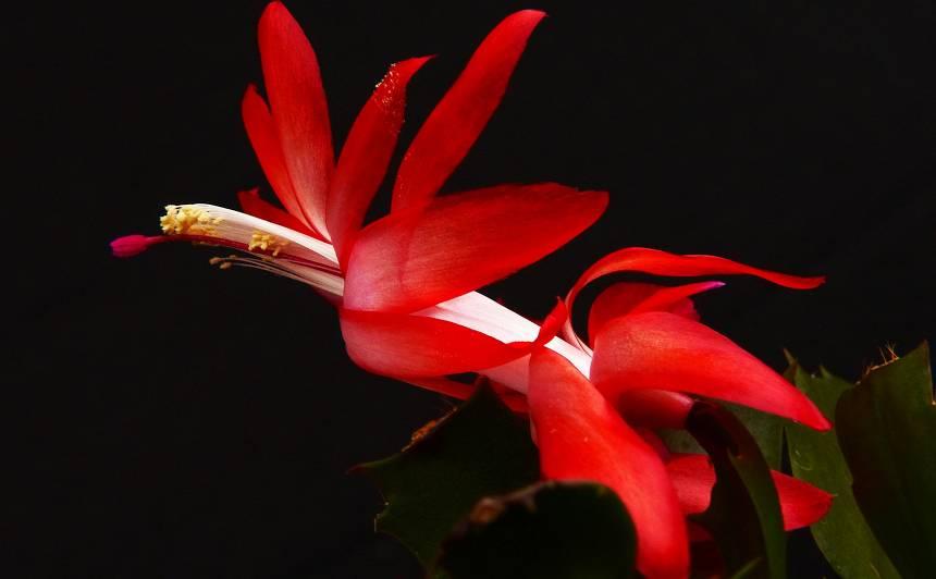 Svētki paies, <strong>puķes paliks</strong>
