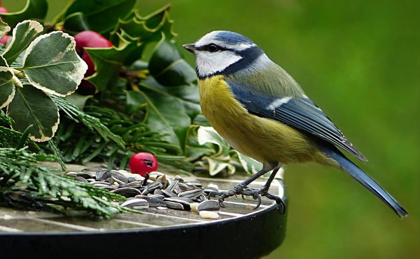 Lai putni dārzā <strong>viesotos arī ziemā</strong>