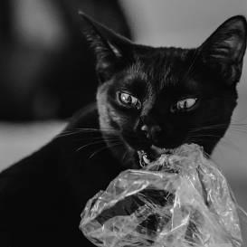 <strong>Kāpēc kaķis laiza maisiņus</strong> un kā viņu no tā atradināt