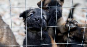 Veterinārārstu biedrība: Likumprojekts par dzīvnieku aizsardzību tiek virzīts <strong>ar nepieļaujamām metodēm</strong>