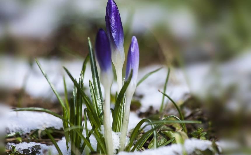 Īstas ziemas nebūšot arī <strong>pēdējā ziemas mēnesī</strong>